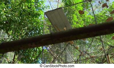 A gibbon monkey shelter. monkey rehabilitation center.