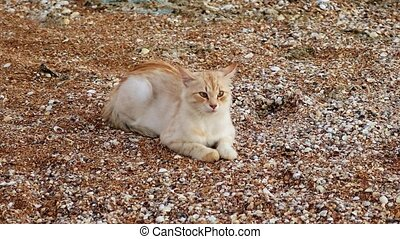 A ginger-white cat resting on sand-and-shells shore of the...