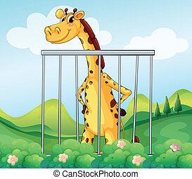A giraffe inside the cage