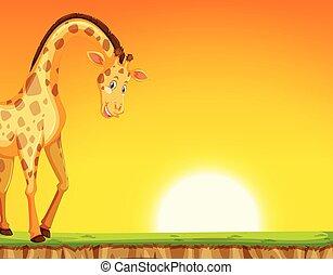 A giraffe on sunset background