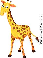 A giraffe on white background