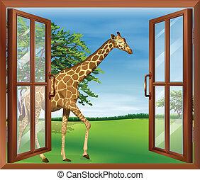 A giraffe outside the window