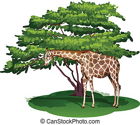 A giraffe under the tree