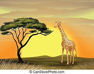 a giraffe under tree