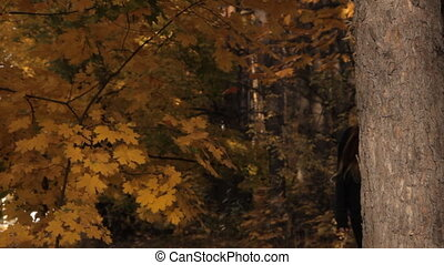 A girl coming out of the depths of the wood stops by a tree against the autumnal leaves and sunset. She holds a tree with her hand takes the hood off and looks around sullenly on the prowl.