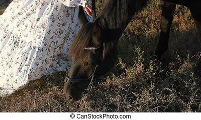 A girl grazes a black horse in the field