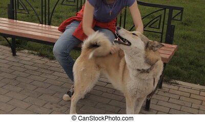 A girl patting a dog. In a park.