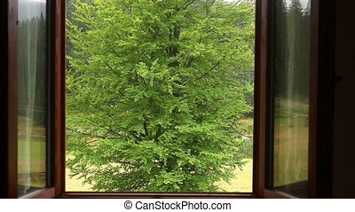 a glance through a window on a green tree