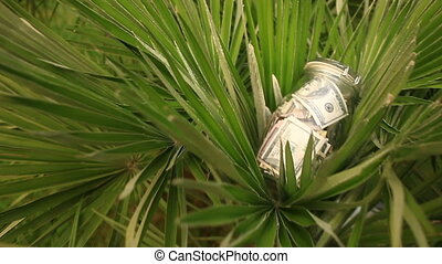 A glass jar with paper money dollars against a palm tree background. Accumulate savings on leave