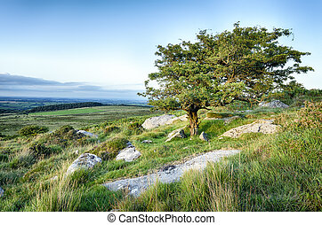 A gnarled tree on Bodmin Moor