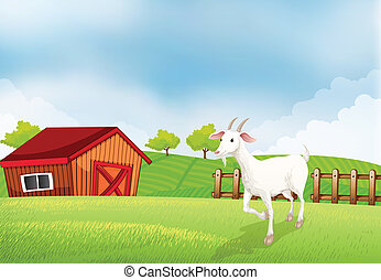 A goat in the farm with a wooden house at the back - ...