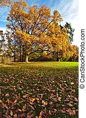 A golden oak tree in the park