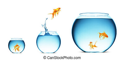 goldfish jumping out of the water - A goldfish jumping out ...