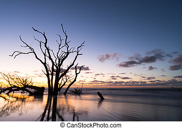 sunrise over the ocean and beach with driftwood in the foreground
