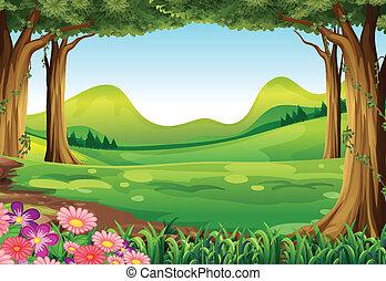 a, grönt skog
