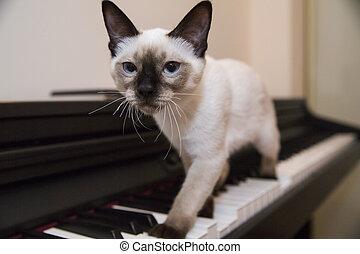 A graceful catstrut on the keyboard - Siamese looking little...