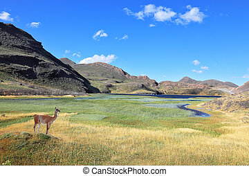 A graceful guanaco and blue lake