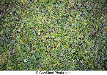 a, gramado, é, coberto, com, antigas, enfraquecido, grass.