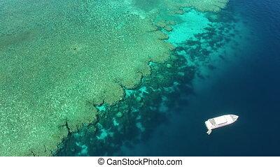 a, grande recife barreira, tiro, por, um, zangão