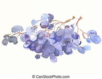 a grape by watercolour