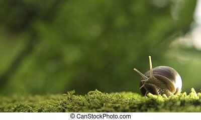 A grape snail on a green moss slowly turns its head HD...