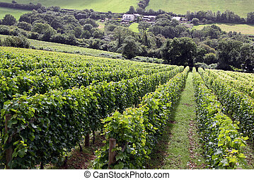 A grape / wine vineyard with farm