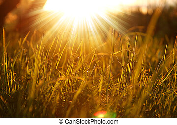 grass background with sun