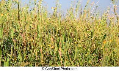 Grass in the steppe close-up
