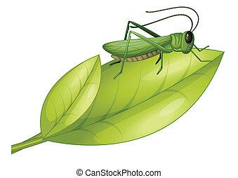 A grasshopper and a leaf