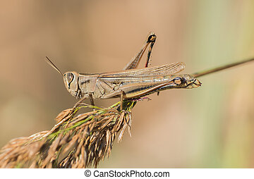 A grasshopper is sitting on a branch