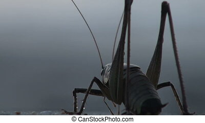 a grasshopper near the ocean