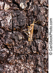 A grasshopper on the tree