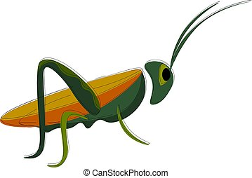 A grasshopper vector or color illustration