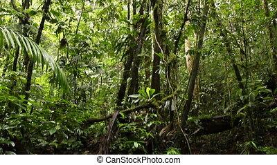 A gravel bottomed rainforest stream - In the Ecuadorian...