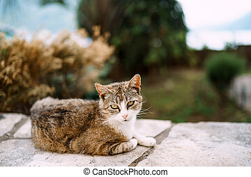 A gray cat lies on a high stone border against a blurred background of trees and grass.