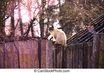 A gray cat sits on a wooden fence in the street