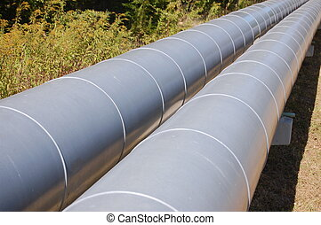 A gray pipeline crossing an old forest