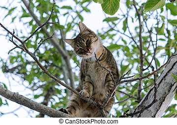 A gray young cat sits on a tree and playfully looks directly at the camera.
