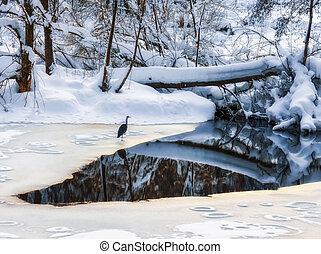 A great blue heron (Ardea herodias)