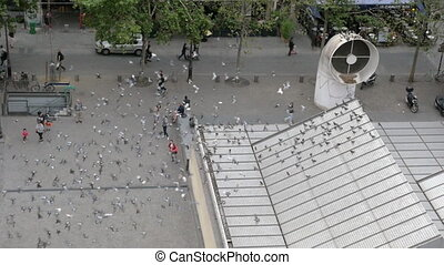 A great number of pigeons flying around square in Paris