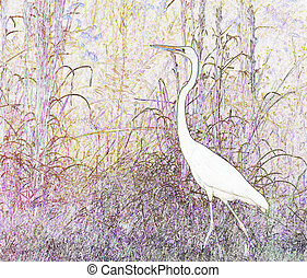 A Great White Heron