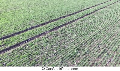 A green agriculture field - Lines and waves in detail look...