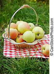 green apples in a basket