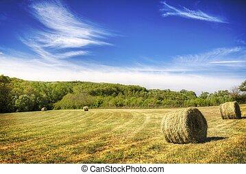 a Green field