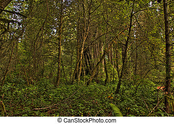 A Green Forest