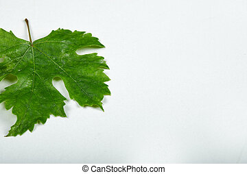A green grape leaf on white background