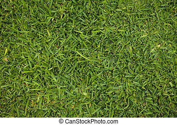 A green Grass Texture, Structure, Background