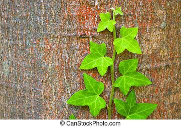 green ivy climbing up tree trunk