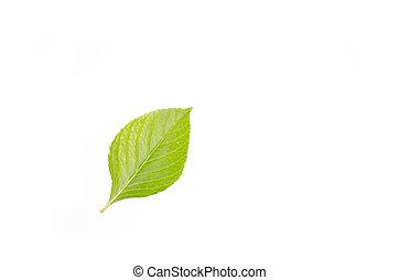 a green leaf