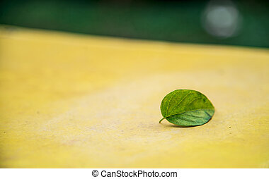 A green leaf on the yellow seat1